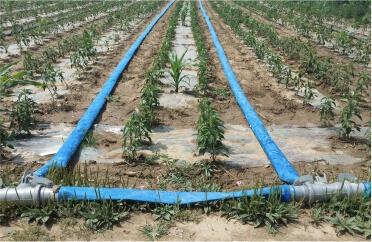 شیلنگ آبیاری کشاورزی